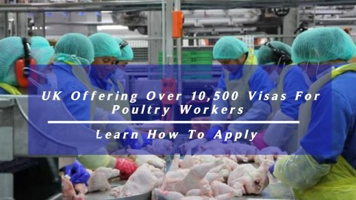 UK Offering Over 10,500 Visas For Poultry Workers